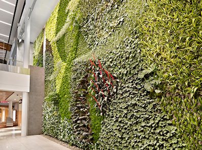 Largest Living Wall inside an airport in North America - Edmonton International Airport