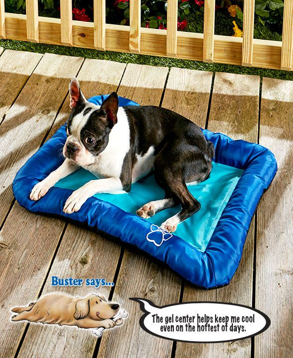 Cooling Pet Mat Gel Center Nontoxic Cushioned Border Dogs Cats