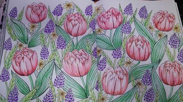 Instagram media mami__0724 - 初見開きページ。 赤色チューリップ第2弾。  #大人のぬり絵  #コロリアージュ #チューリップ #赤 #配色考えず塗りたかった #なので全て赤色チューリップ #しかし紫色の花に手こずる #このページはモヤモヤ発散用 #自己満足 #ワァーって塗りすぎてはみ出しまくり #またこんな時間 #眠くない #仕事行きたくない #朝から仕事 #夜が明ける