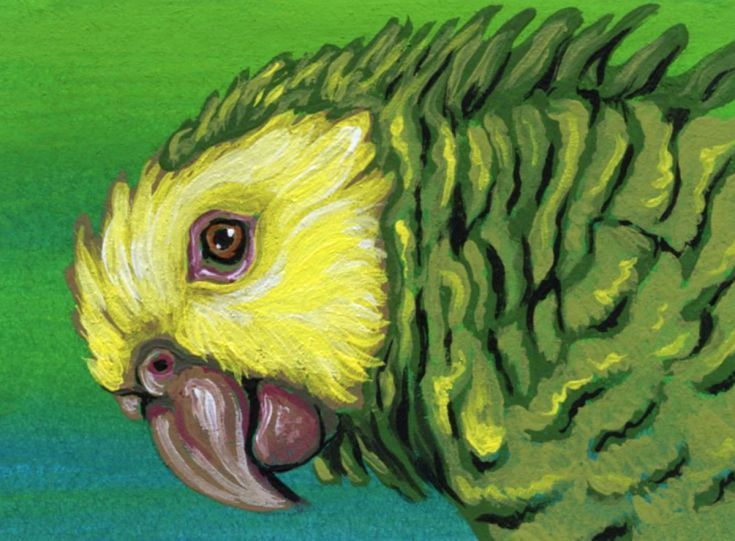 Buy ACEO ATC Original Parrot Yellow Head Amazon Bird Art-Carla Smale, Gouache painting by carla smale on Artfinder. Discover thousands of other original paintings, prints, sculptures and photography from independent artists.