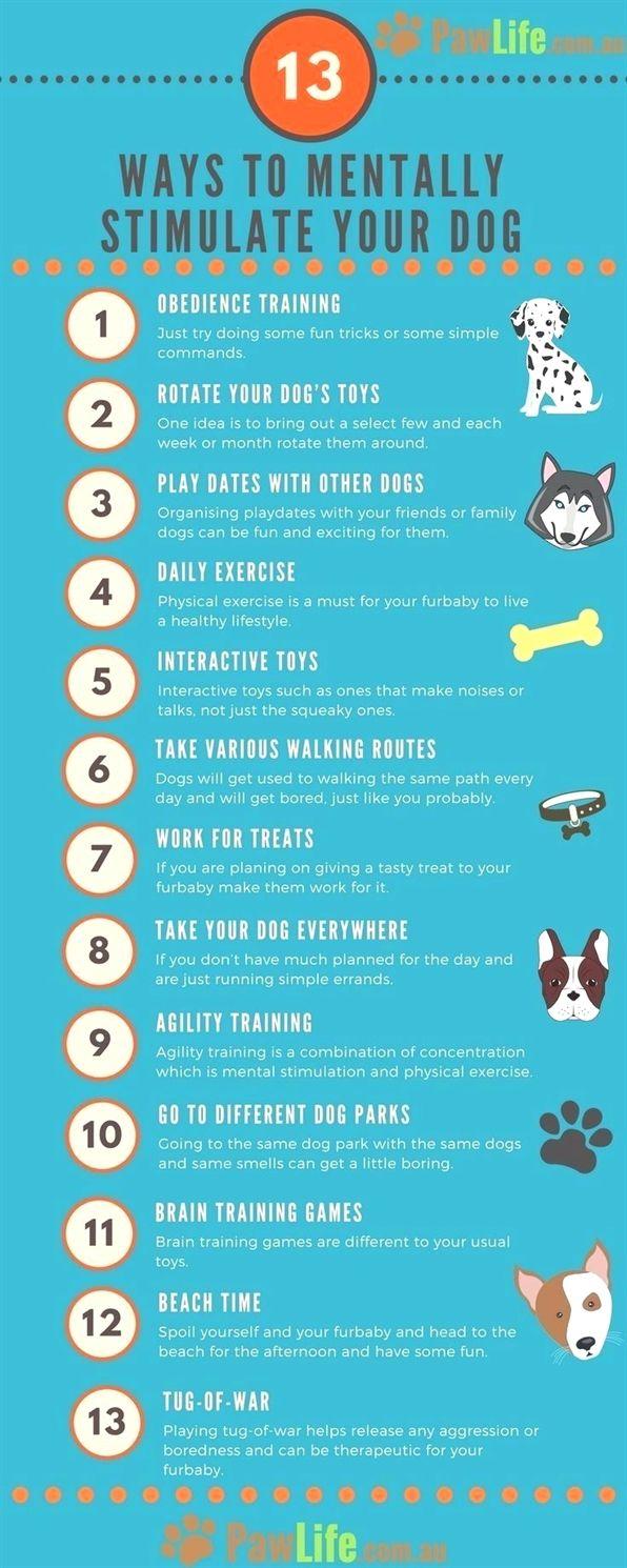 Dog Training Tips Dog Training Platforms Dog Training Heeling