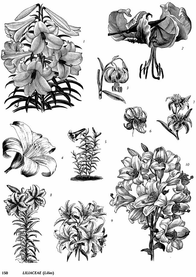 Superb Coloring Pages Trees Plants And Flowers