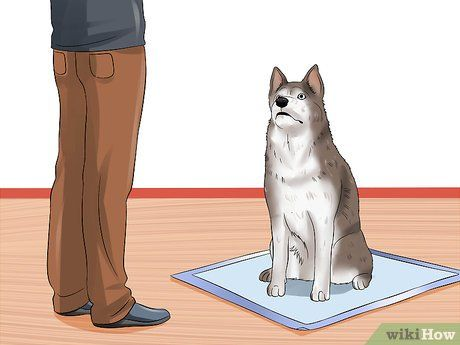 Image titled Use Puppy Pads and Outdoor Potty Training Together Step 3