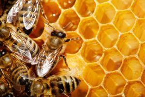 bees gardens