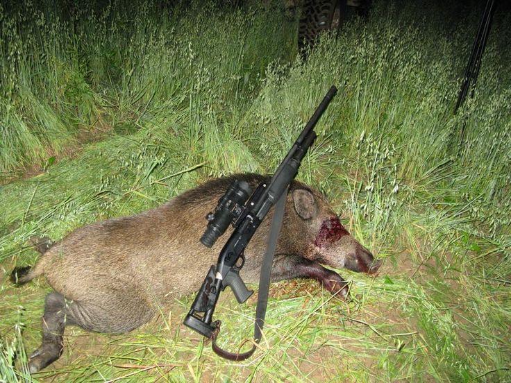 """Охота на кабана с подхода    Самым интересным приключением для опытных охотников может быть охота на кабана с подхода. Кабан — крупный и хитрый, умный зверь. Секачи, являющиеся основным объектом добычи, могут достигать веса больше 250 кг. Пуля с 25 метров из гладкоствольного ружья может даже не пробить мощную шкуру. А у старых самцов и вовсе есть природный """"бронежилет"""" - калкан,плотный нарост на боках, от начала лопатки и до задка. Охота на кабана требует серьезной экипировки…"""