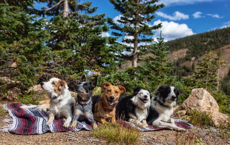 Denver area dog training board train bend oregon
