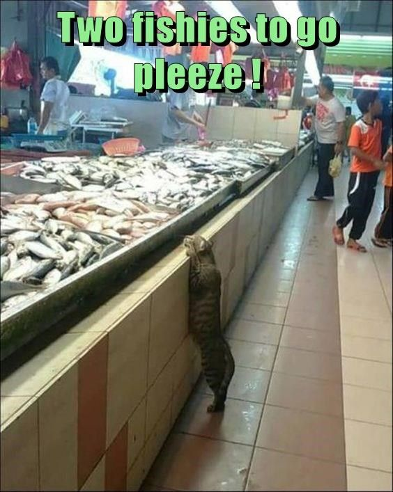 Two fishies to go pleeze ! http://cheezburger.com/9039754240