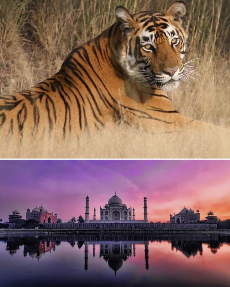 North India Family Tours – North India Tours @ Tours from Delhi  http://toursfromdelhi.com/12-days-north-india-family-tour
