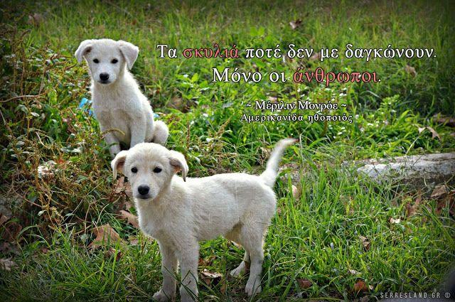Σοφά Λόγια - Σκυλιά και άνθρωποι