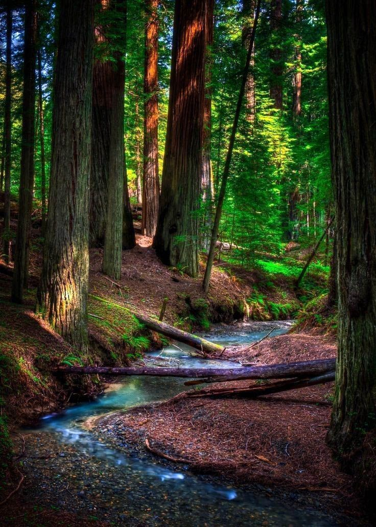 The Most Effective Time to Visit the Redwood Forest