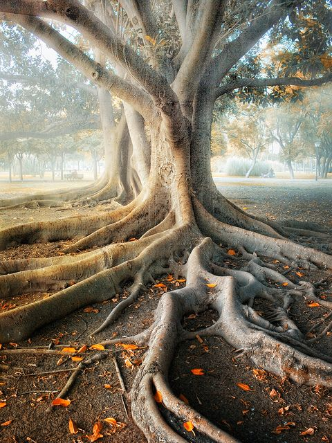 flow like lava, roots are as developed as branches www.liberatingdivineconsciousness.com