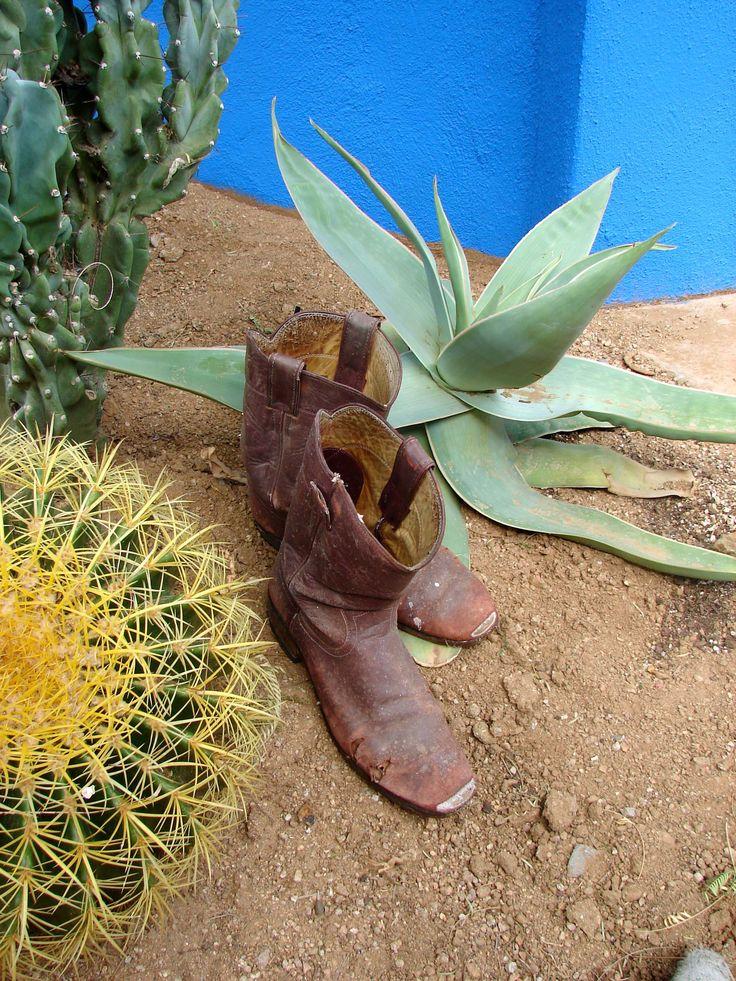 Garden Ideas 2012 the 25+ best desert backyard ideas on pinterest   desert