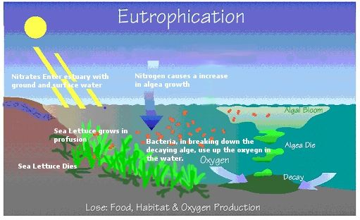 Nitrates and Their Effect on Water Quality – A Quick Study | Wheatley River Improvement Group