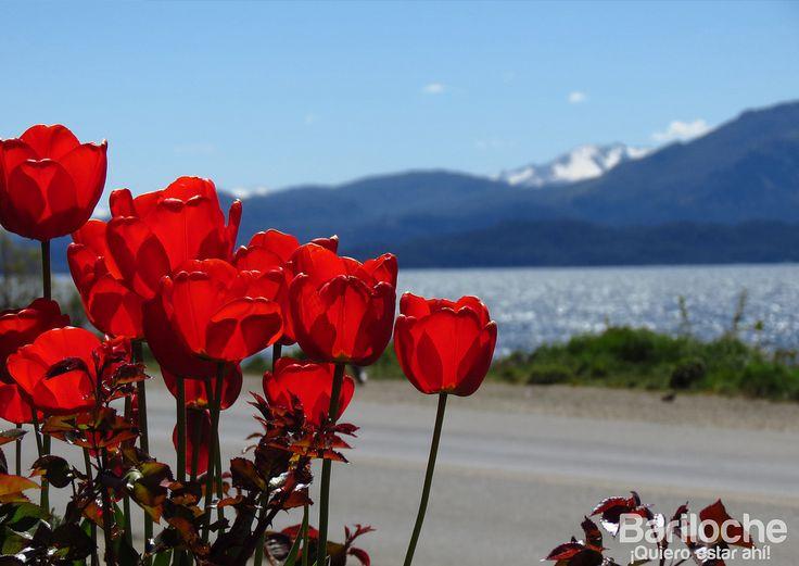 Tulipanes y Lago, en Bariloche