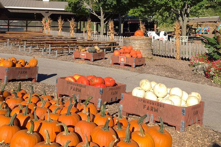 The annual Harvest Festival