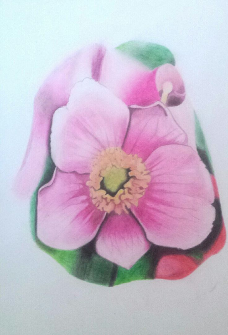 #flower #drawingpencils #nature #drawing #colours #pencils