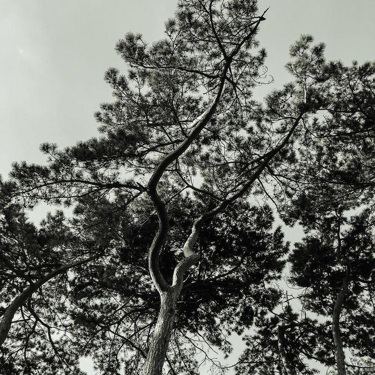 #tree #trees #treeporn #tree_magic #treeshunter #tree_captures#treescollection #treeoflife #blackandwhite #black #blackandwhitephotography #bw_trees #bw#bw_lover #bw_nature #nature #naturelovers #nature_perfection #naturephotography #arbre#landscape #trees_masters #bwstyles_gf #beautiful #photooftheday #picoftheday #instagood #iloveanseladams #sky
