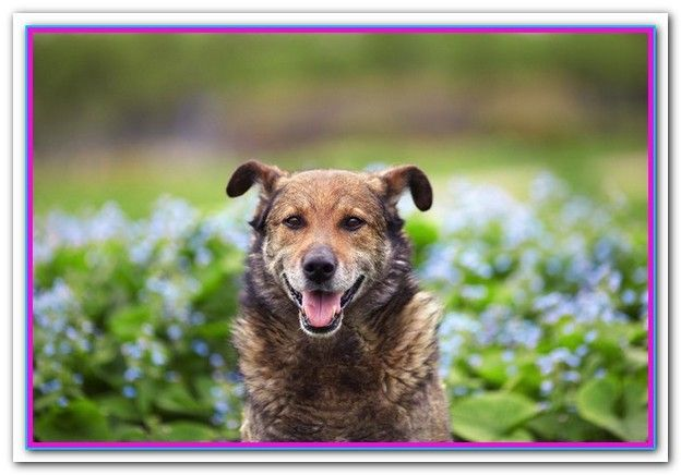 Best Dog Food For Older Dogs With Skin Allergies Purina Pro Plan