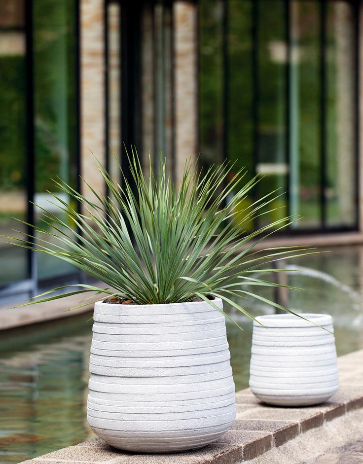 132 best truffaut plantes d 39 int rieur images on for Plante yucca
