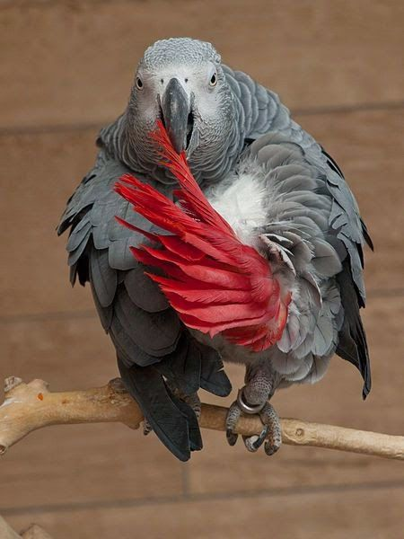 240 Best Images About I Love My Parrot On Pinterest