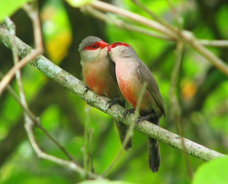 Ученые: наблюдение за птицами и деревьями снижает уровень депрессии и усталости http://kleinburd.ru/news/uchenye-nablyudenie-za-pticami-i-derevyami-snizhaet-uroven-depressii-i-ustalosti/