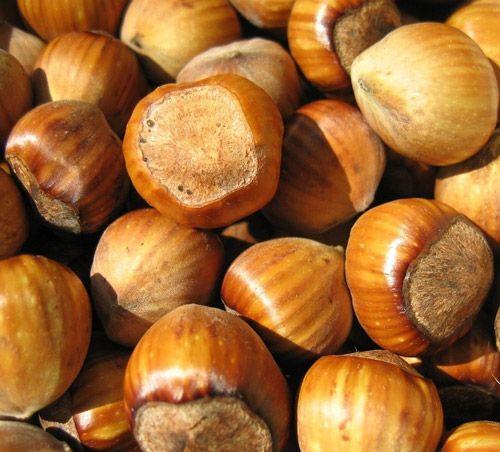 Hazelnut (Filbert Nuts, Cobnuts): Benefits, Side Effects and Information