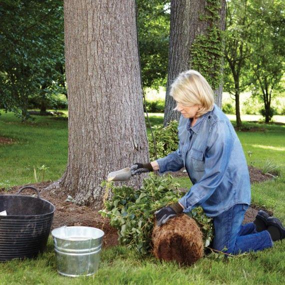 Martha's Step-By-Step Guide to Climbing Hydrangeas | Martha Stewart