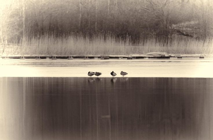 RETRO DUCKS... by Mike Back
