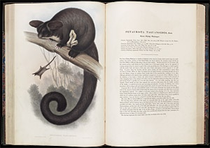 """John Gould's three-volume work on Australian mammals published in 1845. Work on """"Mammals"""" was carried out by the artist Henry Richter, who produced lithographs for Gould's works after Elizabeth Gould died in 1841."""
