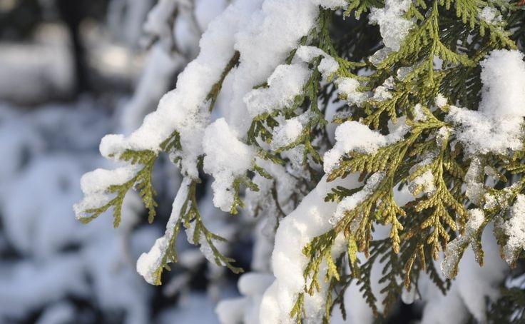 śnieg w ogrodzie  Fot. SurmaGFX - pixabay.com