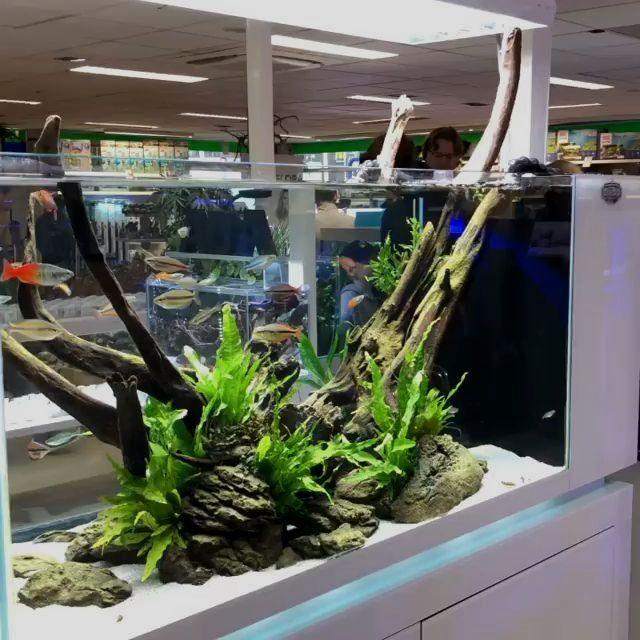 Bonsai Driftwood Aquarium Tree Bsb Random Pick 12in H X 16in L Natural Handcrafted Fish Tank Decoration Helps In 2020 Aquascape Fish Tank Decorations Fish Tank