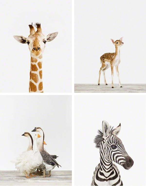 Cute Animal Prints For A Nursery Shmunkins Pinterest Animals And Baby