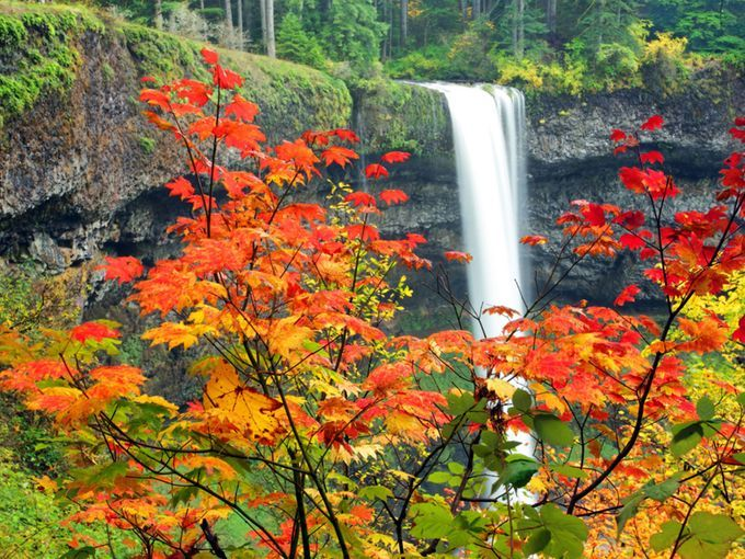 Trail of Ten Falls: Silver Falls State Park, Ore.:  The eight-mile Trail of Ten Falls in Silver Falls State Park will take you past a series of gorgeous cascades accented with the vibrant oranges, reds and yellows of fall. Day-use permits are required year-round and can be purchased at the park entrance booth.