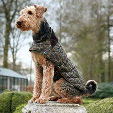 'Dog Coat' Kariert von Barbour    bestellen - THE BRITISH SHOP - englische Kleidung online günstig kaufen