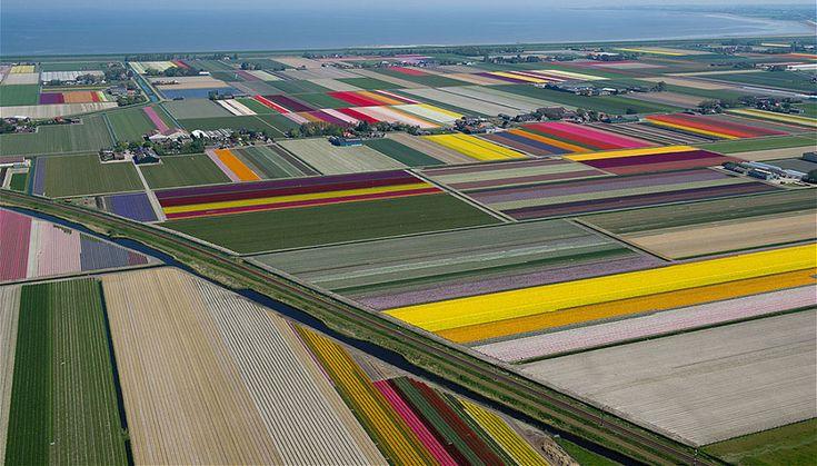 Campi di tulipani, visti dal cielo. Flying over tulip fields