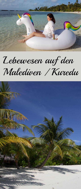 Kuredu Island Resort Malediven in der Regenzeit im Juli. Lhaviyani atoll - schwimmen mit Schildkröten, Riffhaie, Muränen, Kugelfische etc. Ein Paradies im Indisches Ozean.