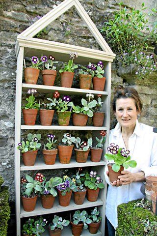 auricula theatre . this formal yet simple white washed structure doesn't detract from the primulas . via shropshire magazine