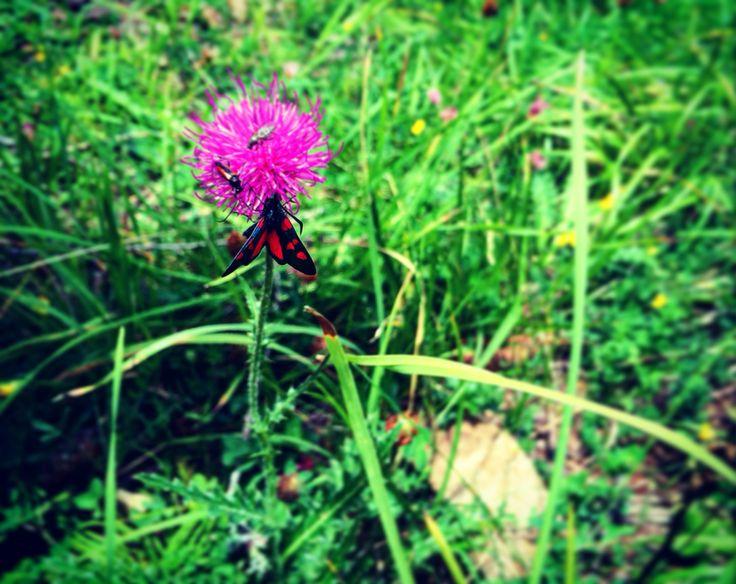 I colori della natura!!! #animals #flowers #green #colors #scoperta #scuolascicortina #larossacortina  www.scuolascicortina.com/la-rossa-cortina-programma-settimanale/