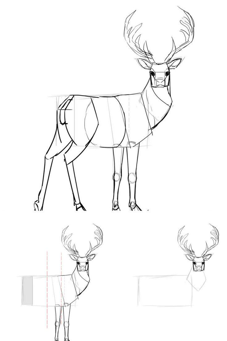Comment dessiner un cerf apprendre dessiner avec dessindigo drawings moose art et art - Comment dessiner un cerf ...