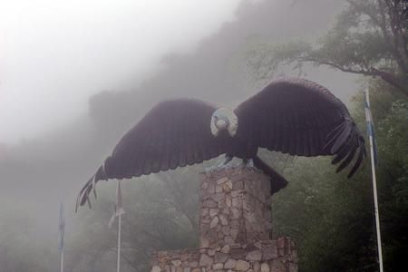 Condor at the fog Photo by Daniel Mastandrea — National Geographic Your Shot