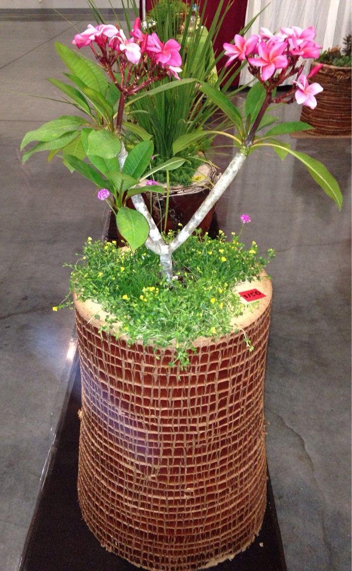 120 best stump planters images on pinterest planters palms and diy