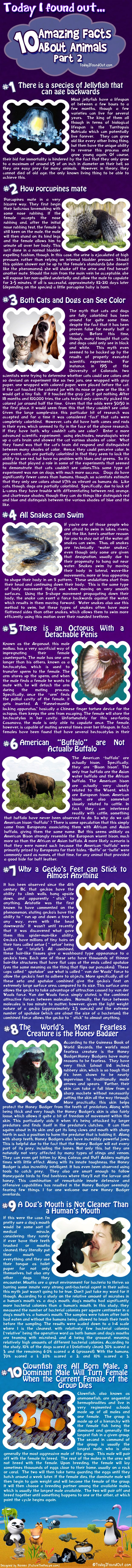 Animal Facts Infographic http://on.fb.me/LHKq17
