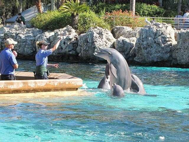 17 Best Images About FLORIDA On Pinterest