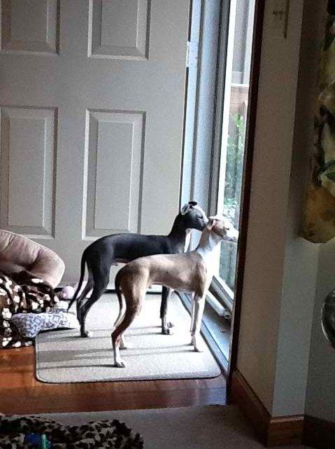 ~ Waiting by the door ~