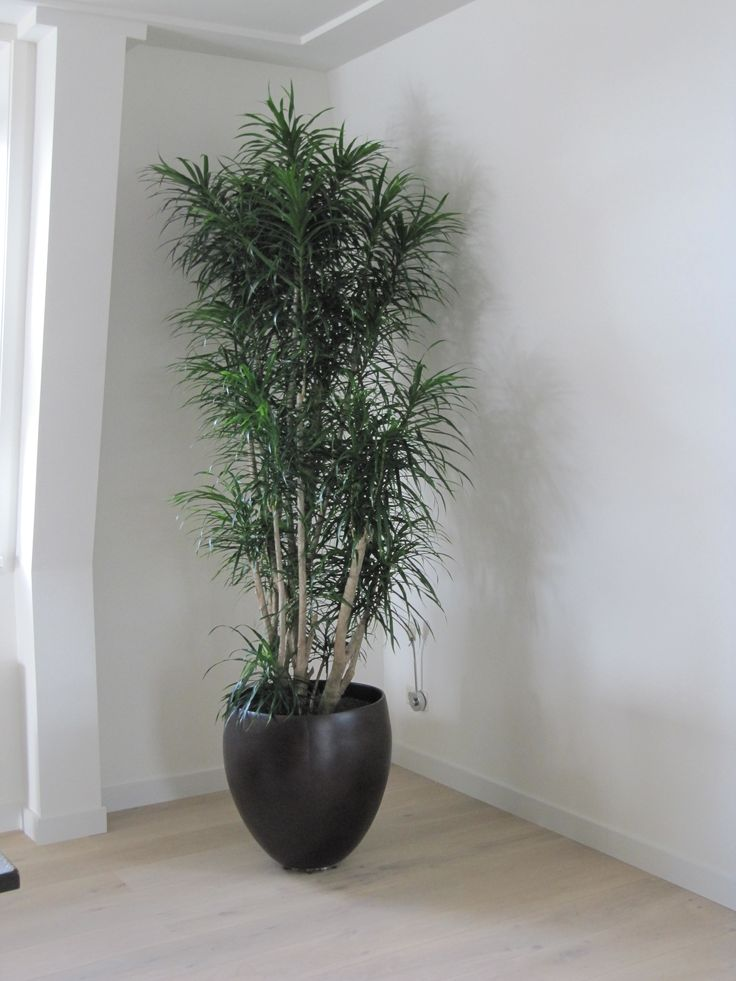1000 images about plant on pinterest pot designs van for Binnen interieur