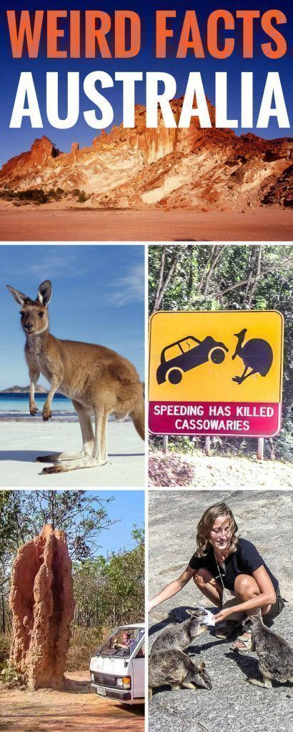 Weird Australia Facts. There's no getting around the fact that Australia is a weird, but wonderful place. From termite mounds as big as a building, to animals that defy description, we tell you all that's weird and cool about Australia. Australia Facts | Australia Facts for Kids | Cool Australia Facts | Fun Australia Facts | Australia Travel #Australia #australianproblems #aussie #Australiakids #australiatravel #travelfacts #australiaanimals