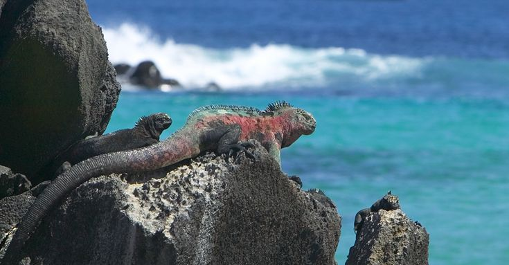 There's no place like the Galapagos and no better way to see it than with Natural Habitat Adventures, the official travel partner of the World Wildlife Fund.
