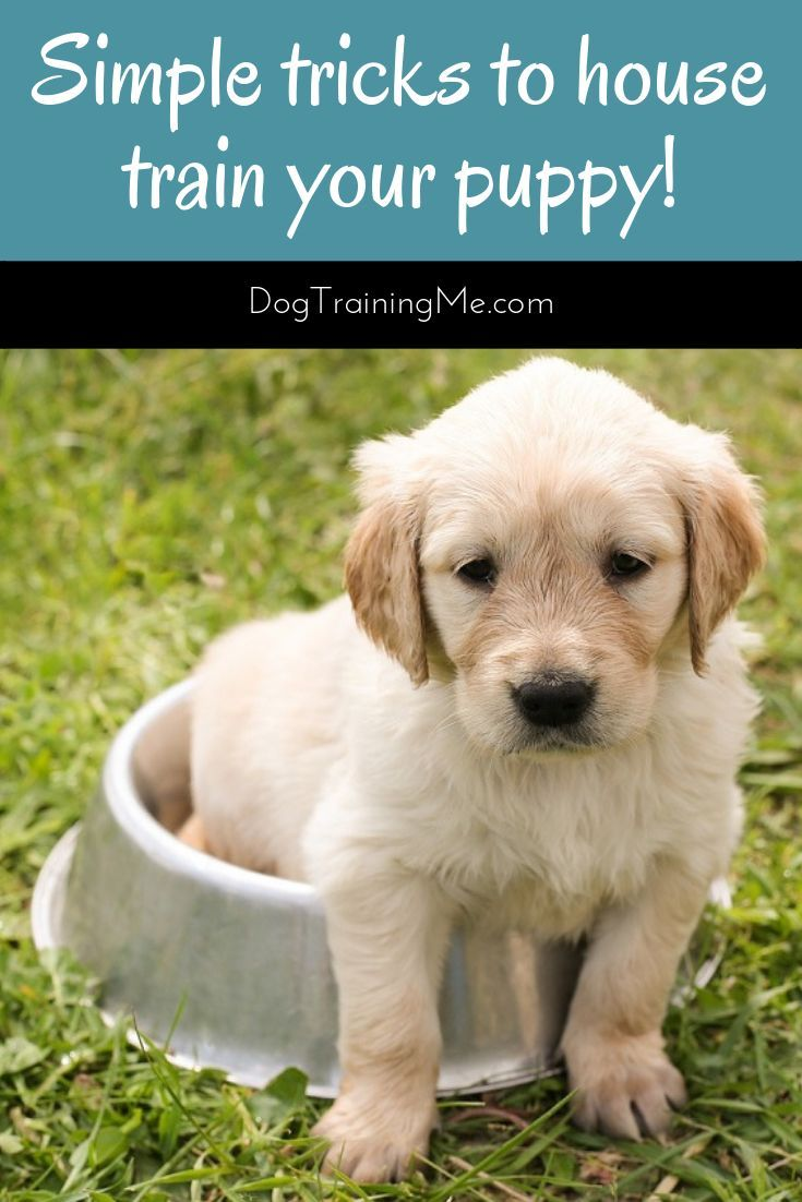 Learn How To Stop Puppy Accidents Now Do You Want To Learn How To