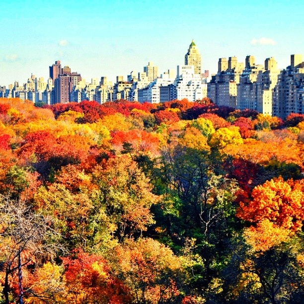 I love NYC in the Fall @Chris Cote Otting to remind us all we have in common