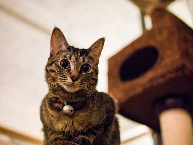 Indoors Versus Outdoors Cats: Is One Really Better Than the Other?